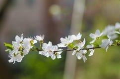 Vrolijke bloesembloemen op de lentedag Stock Foto's