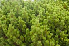 Vrolijke bont-bomen royalty-vrije stock foto