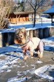Vrolijke hond in de kleuren van de de lentedag stock afbeelding