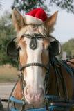 Vrolijke horsemas Royalty-vrije Stock Foto's