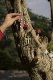 Vrolijke Kerstmis en Gelukkig de giftenconcept van de Nieuwjaarboom Royalty-vrije Stock Afbeeldingen