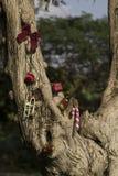 Vrolijke Kerstmis en Gelukkig de giftenconcept van de Nieuwjaarboom Stock Fotografie