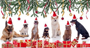 Vrolijke Kerstmis en Gelukkig het Jaarconcept van het hondennieuws Royalty-vrije Stock Foto's