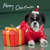 Vrolijke Kerstmis - hond Royalty-vrije Stock Foto