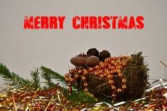 Vrolijke Kerstmis Nette tak met een nest, noten en denneappels Inschrijvings Vrolijke Kerstmis Grijze achtergrond Royalty-vrije Stock Afbeelding