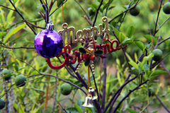 Vrolijke Kerstmis op citrusboom Stock Afbeelding
