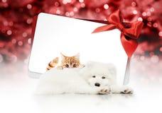 Vrolijke Kerstmisuithangbord of giftkaart voor dierenwinkel of dierenartsclini royalty-vrije stock afbeelding