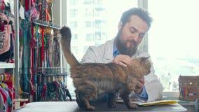 Vrolijke mannelijke dierenarts arts die leuke kat petting bij zijn kliniek stock video