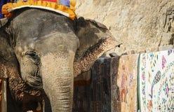 Vrolijke Olifant Jaipur, staat Rajasthan India stock fotografie