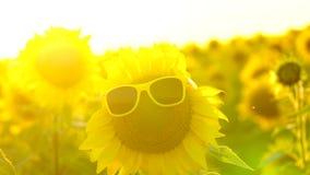 Vrolijke zonnebloem geluk Zon De zomer zomer stock videobeelden