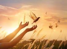 Vrouw bidden en vrije vogel die van aard op zonsondergangachtergrond genieten stock afbeelding