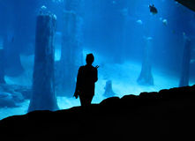 Vrouw bij aquarium Royalty-vrije Stock Afbeelding
