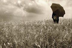 Vrouw in cornfield Stock Afbeeldingen