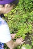 Vrouw in de tuin Stock Afbeeldingen