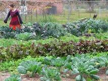 Vrouw die aan landbouwbedrijf werken Stock Foto's