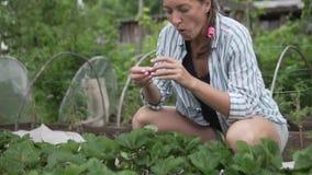 Vrouw die aardbeien in de tuin in de tuin zoeken stock videobeelden