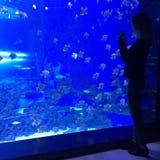 Vrouw die aquarium bekijken Royalty-vrije Stock Foto's