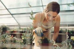 Vrouw die bij een cactustuin werken royalty-vrije stock foto