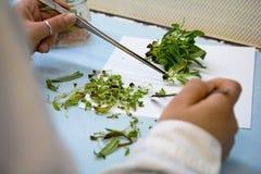 Vrouw die bij zaden werken Stock Foto's