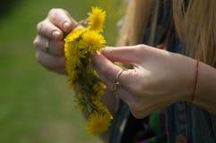 Vrouw die bloemen op een weide, handclose-up opnemen Ochtend licht, groen gras wijnoogst stock foto