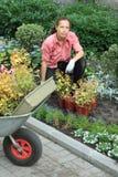 Vrouw die bloemen plant Royalty-vrije Stock Foto's