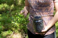 Vrouw die blueberrys plukken Stock Afbeelding