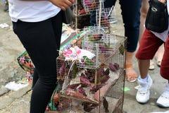 Vrouw die de gevangen kleine vogels van de boommus in draadkooi verkopen op stoep royalty-vrije stock foto