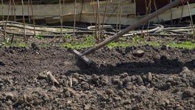 Vrouw die de grond voor het planten van groenten richten stock video