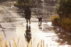 Vrouw die de hond in regenachtig weer lopen royalty-vrije stock afbeelding