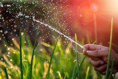 Vrouw die de tuin water geeft Royalty-vrije Stock Afbeelding