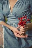 Vrouw die een emmer van rozebottels houden Royalty-vrije Stock Afbeeldingen