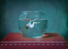vrouw die in een goudviskom zwemmen royalty-vrije stock fotografie