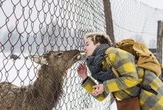Vrouw die een hert op landbouwbedrijf voeden stock foto
