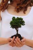 Vrouw die een kleine boom houdt stock foto's