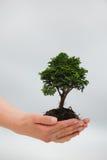 Vrouw die een kleine boom houdt royalty-vrije stock foto's