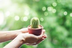 Vrouw die een kleine cactus in handen zacht op aard houden Stock Foto