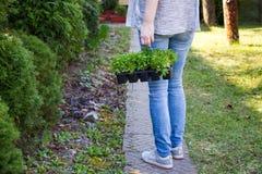 Vrouw die een krat met zaailingen houden Stock Foto