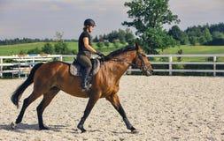 Vrouw die een Paard in Jumper Ring berijden Royalty-vrije Stock Foto