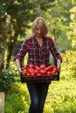 Vrouw die een tomatendoos houden Stock Afbeeldingen