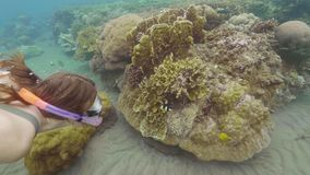 Vrouw die en op tropische vissen letten zwemmend dichtbij koraalrif snorkelen Onderwatermenings exotische vissen in overzees Snor stock videobeelden