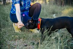 Vrouw die haar hond loopt Stock Foto's