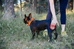 Vrouw die haar hond loopt Royalty-vrije Stock Foto