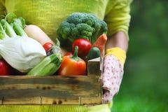 Vrouw die handschoenen met verse groenten in de doos in haar han dragen Royalty-vrije Stock Fotografie