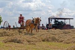 Vrouw die Hay With Horse Drawn Equipment harken Stock Afbeeldingen