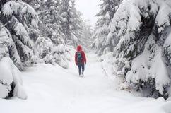Vrouw die in het bos wandelt Stock Foto's
