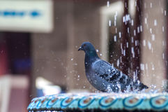 Vrouw die het ijskoude douche gillen neemt grappig bij camera Stock Fotografie