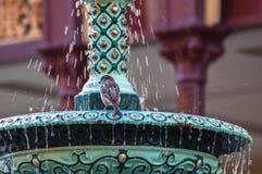 Vrouw die het ijskoude douche gillen neemt grappig bij camera Royalty-vrije Stock Fotografie