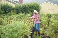 Vrouw die installaties en bomen kiezen bij kinderdagverblijf royalty-vrije stock afbeeldingen