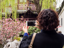 Vrouw die kersenbloesems met cellphone in Chinese tuin fotograferen Royalty-vrije Stock Afbeelding