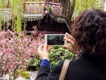 Vrouw die kersenbloesems met cellphone in Chinese tuin fotograferen Stock Foto's